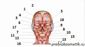 Мышцы лица Упражнения для мышц лица